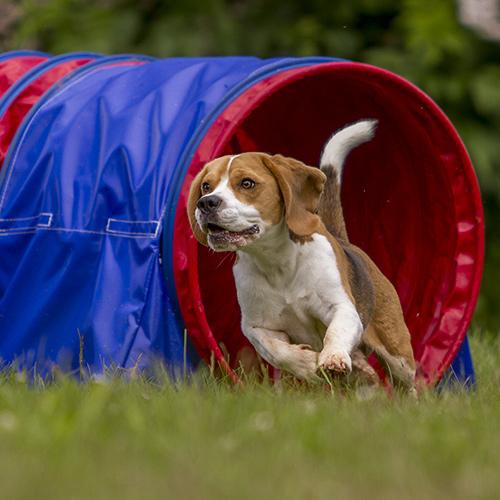 Dog Agility Courses